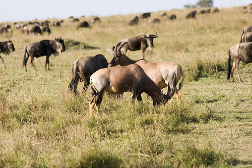 Tsavo East Wilderness Excursion