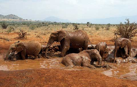 Tsavo East Elephants Safari