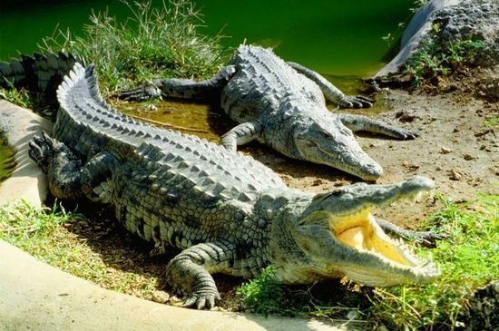 Nairobi Mamba Village or Crocodile Farm Tour